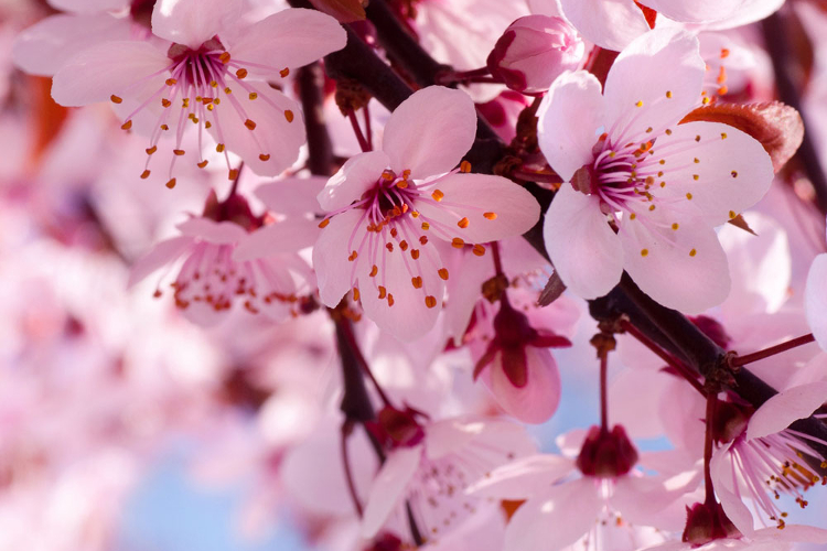 Celebration of Spring