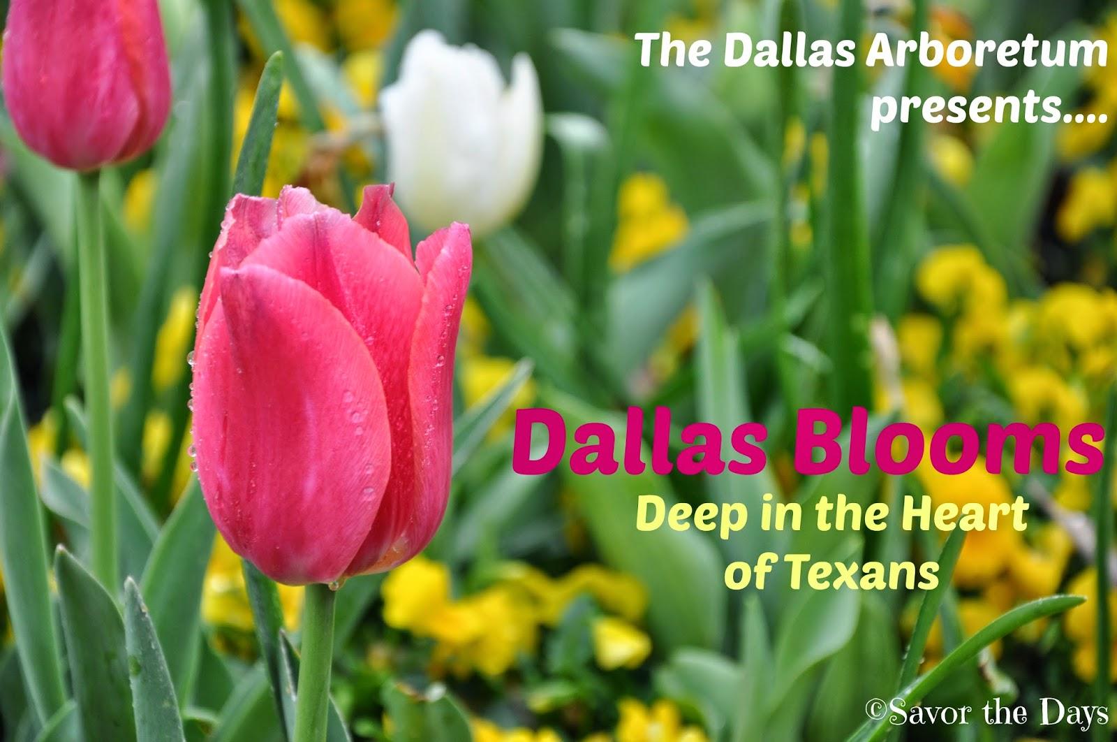 Japan-America Society at Dallas Blooms